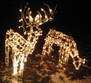 Your Reindeer