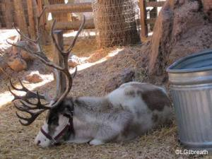 And a tired reindeer is a USELESS reindeer
